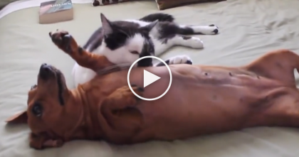 This Hyper Dog Won't Calm Down, But Kitty Has The 'Purrfect' Solution… WATCH