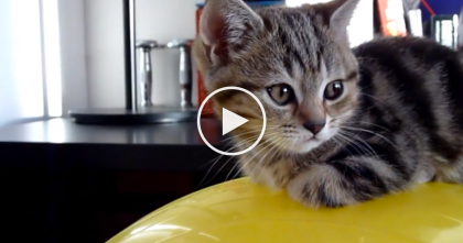 This Kitten Discovers A New Place To Sleep And It's The Sweetest Thing Ever.