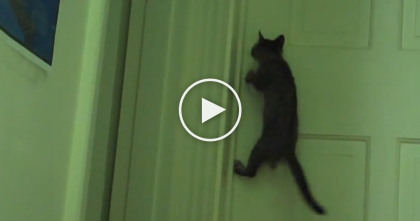 Genius Kitten Jumps On The Door, But Now Watch What He Does, AMAZING.