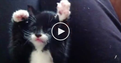 This Kitten Tries To Catch His Owners Hand And Wins With Cuteness!