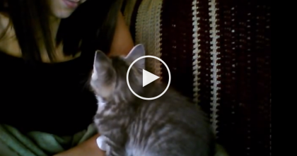 This Kitty Takes A Nap, But First He Does Something Too Adorable… Awww!