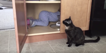 Cat gets sick of the kid, but then does THIS… They never expected him to do this, hahahaha!!