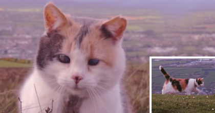 This Blind Cat Climbs A Mountain, By The End…I'll Never Forget This!