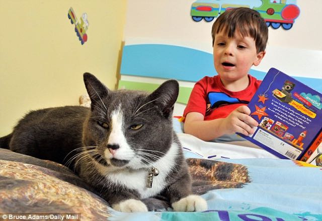 cat-and-autistic-boy-2