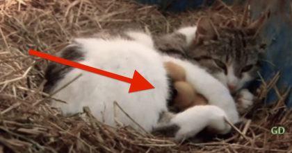 This Cat Shocked Her Owners After They Discovered What She Was Hiding.