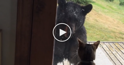 Fearless Cat Stands Up To Wild Bear In The Craziest Way Ever… Just Watch, WHOA.