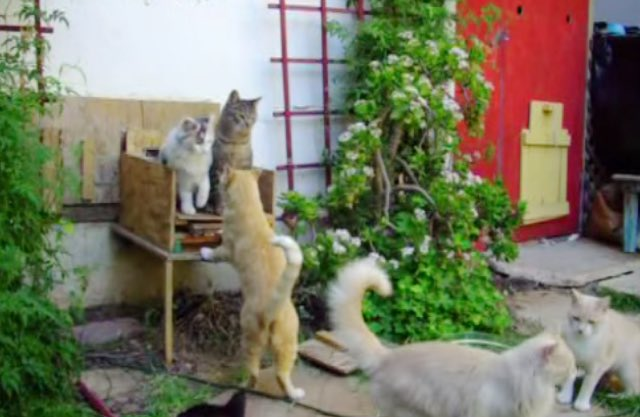 feral-cats-house