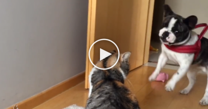 He Desperately Wants To Play, But When You See How The Cat Reacts… LOL.