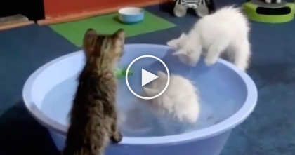 Time For These Kitties To Get A Bath, But The Results? WOW, I Sure Didn't Expect This!