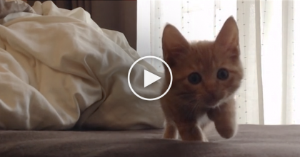 He Woke Up From A Nap, But Guess What He's Trying To Do Now? Awww!!!
