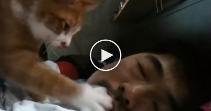 He Can NEVER Get Enough Sleep In The Morning… Now Watch The Reason Why, It's Adorable