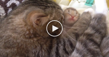 SOO Much Love & SOO Much Cuteness… This Cat Mom Knows Just What To Do, Awwww!!