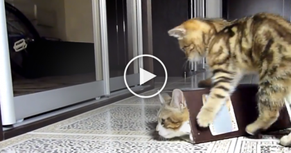 These Kittens Discover 'The Box' But Their Reactions? Simply Hilarious…