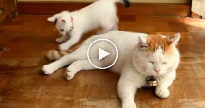 When This Kitten Discovers His Friends Tail… Just WATCH What Happens, LOL.