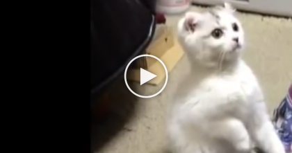 This Kitten Gets Very Curious About Something, But What He Does Next? OMG.