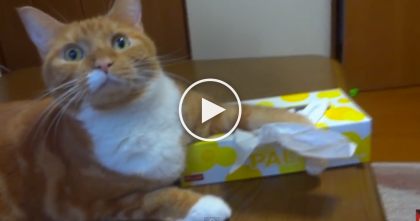 "She Tries To Grab A Tissue, But Watch How The Cat Reacts… ""NO, You Can't Have This, It's Mine!"""