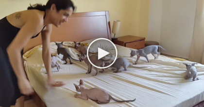 When You Try To Make Your Bed With 10 Excited Kittens?? You Gotta See It, OMG…