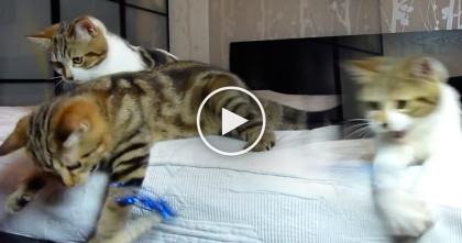 All These Kittens Need Is Their Sparkle Toy And Some Happy Piano Notes… ADORABLE!