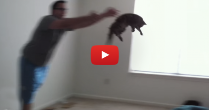 "After Coming Home, This Kitty Requests For More ""Flying"" Games… Then Sparks Controversy."