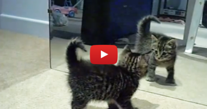 """Oh My, What Is This?!"" Itty Bitty Kitty Sees An Unexpected Intruder And…"