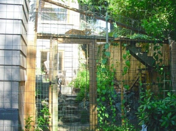 catio-cat-patio-2