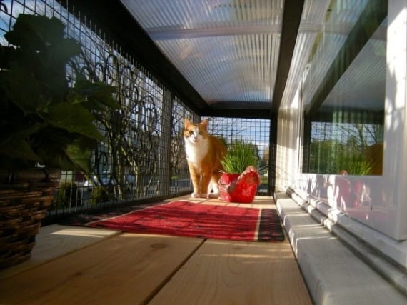 catio-cat-patio-5