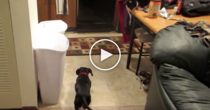 WATCH: Cat Discovers The Best Way To Make Friends With A Dog… How Did He Learn This??