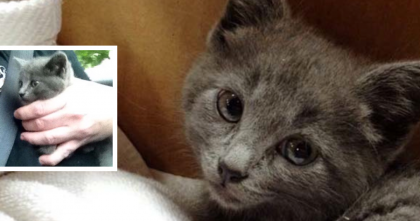 Man finds adorable kitten on a three lane highway and rescues her, awwww!!