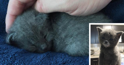 She Was SOO Small, She Almost Didn't Make It… But Now? You've Gotta See Her, ADORABLE…