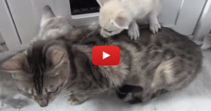They All Look Like Kittens, But Take A Closer Look… This Is Simply Amazing!!