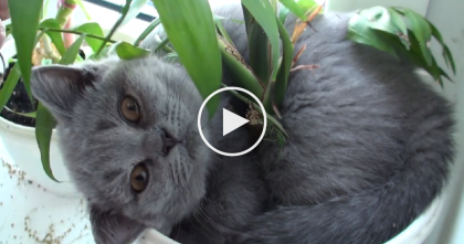 They Couldn't Find The Cat, So They Looked In The Flower Pot… OMG, It's Too Adorable!!