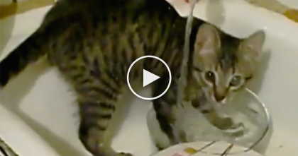 They Heard Something, But When They Saw What The Cat's Doing… They Started Recording, OMG.
