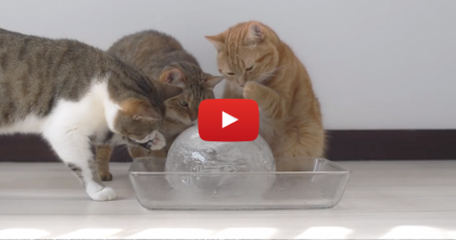 They Put A Balloon With Water In The Freezer, But The Results? Best. Entertainment. EVER.