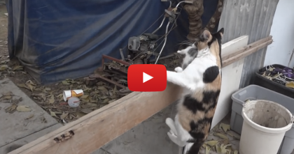 They Wanted To Know Where Mamma Was Hiding Her Kittens… Just Watch And See!