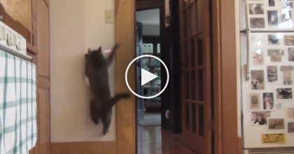 This Cat Goes Bananas For What?? The Laser… And He Sure Does Love It!!