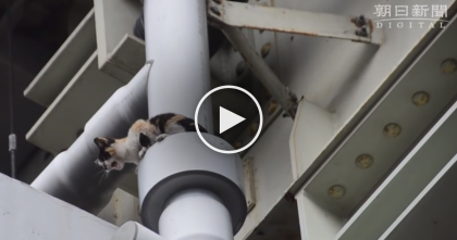 This Frightened Kitten Trapped Under Bridge Nearly Falls To His Death, But Then…