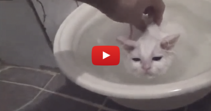 This Kitten Gets A Bath, But Then… Wow, I Can't Believe What Happens!