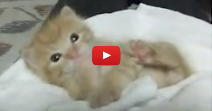 This Kitten Was Rescued From A Wall, But Just Watch Him Now… Those Paws, Awwww!!