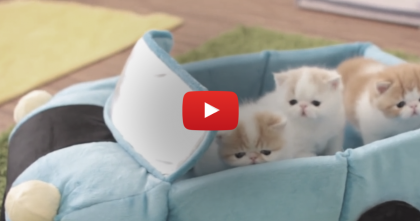 Three Kittens Have The Time Of Their Lives, Until… Uh Oh! Here Comes Mom!