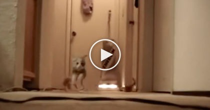Watch The Reaction When These Kittens Turn On Their New Toy, Then… Oh Boy!!