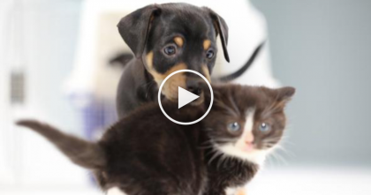 What Happens When You Put 4 Kittens And 4 Puppies Together? You're About To See…