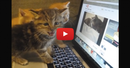 When Kittens Notice The Cats On The Screen… I Just Can't Handle It, SOO Cute!!