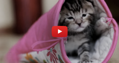 They Gave This Kitten An Oven Mitten, But Then… Just Watch The Cuteness, Awww!!!