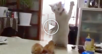 This Cat Notices Playful Newborn Kittens, But Then… Can't. Stop. LAUGHING.