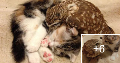 This Kitten Wasn't So Sure About A New Friend, But After A Few Minutes…My Heart Just Melted!