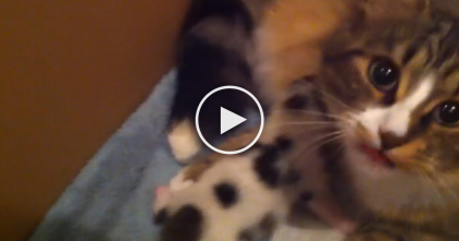 She Has Only One Baby Kitten, But Watch What Happens When Kitten Meows For Help… OMG…