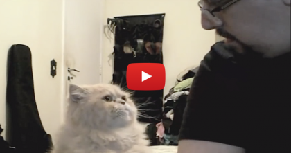 He Does This All The Time, So His Owner Decided To Grab The Camera… Simply PRICELESS.