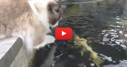 He Puts His Paw In The Water, But Then… I Can't Believe This Is Happening!! WATCH.