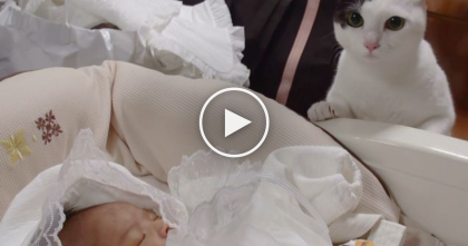 Kitty's Reaction When She Notices A New Family Member… You Gotta See It!!
