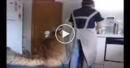 She's Washing The Dishes, But Keep Watching To See What Kitty Does Next…